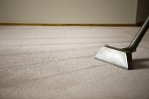 Keeping your carpet clean with a dog